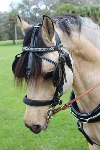 Luxe Patent Leather Bridle