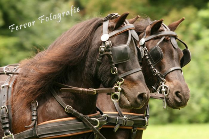 Lethertech Leather Bridle
